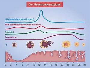 Zyklus Nach Pille Absetzen Berechnen : pille danach ptaheute ~ Themetempest.com Abrechnung