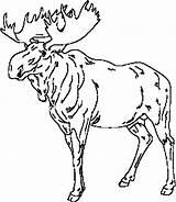 Moose Coloring Leader Elch Zee Colornimbus Ausmalbilder Alaska Zum Malvorlagen Konabeun Canadian Sheets Ausdrucken Silhouette Template Canada Animal sketch template