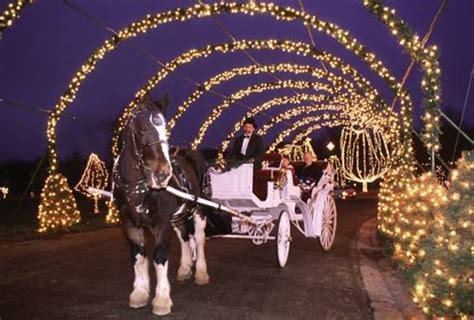 rip king the clydesdale tilles park winter wonderland