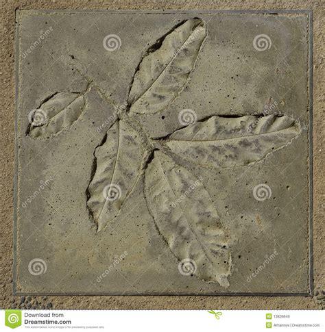 leaf concrete stamp royalty  stock images image