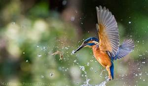 Wildlife Photography | Best Wildlife images by Max Rinaldi ...