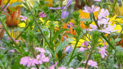 giardini fioriti i consigli degli esperti e i costi medi dei giardini fioriti