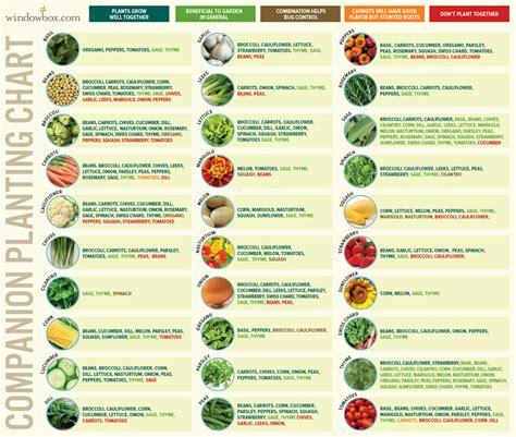 companion planting chart  vegetables  fruits