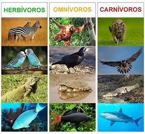 Animales carnivoros herviboros omnivoros insectivoros Imagui