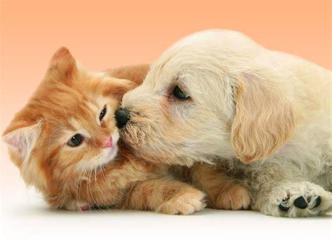 support iphone bureau 10 photos qui prouvent que chats et chiens peuvent s 39 apprécier