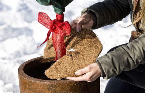 Pflanzen Winterfest Machen by Balkonpflanzen Winterfest Machen Pflanzen Richtig