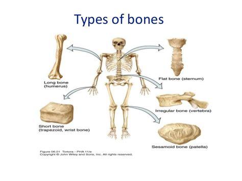 Blood Supply Of Long Bones