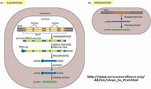 The Central Dogma Of Biology