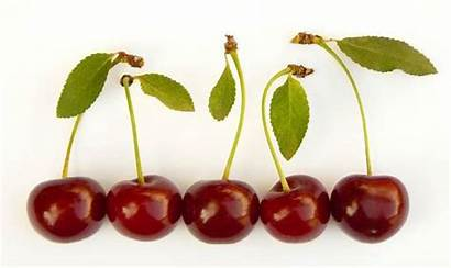 Cherries Facts Express Cherry Word