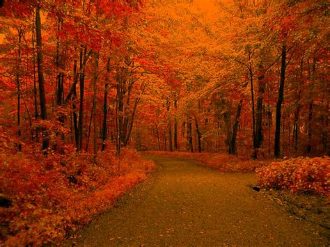 Fall Backgrounds Image  Wallpaper Cave