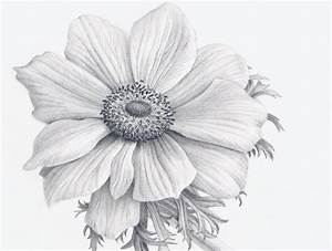 Flower Drawing Realistic Realistic Flower Drawing ...