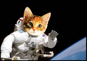 cat astronaut cat astronaut wallpaper wallpapersafari