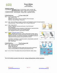 Chapter 5 The Working Cell Worksheet Answers