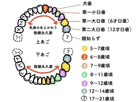 乳歯 抜き 方
