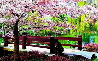 Spring Desktop Wallpapers Flowers Screensavers Springtime Tablet
