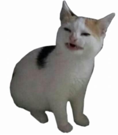 Transparent Memes Meme Dank Reason Where Some