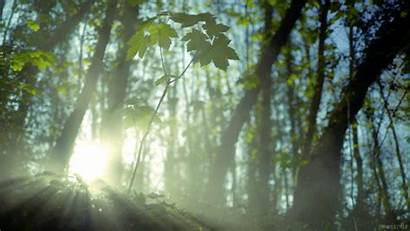 Living Forest Stills Giphy Cinemagraph Nature Smoke