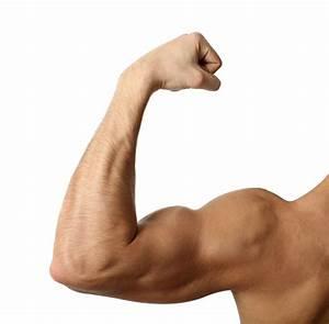 Flexing Biceps - The Observation Deck