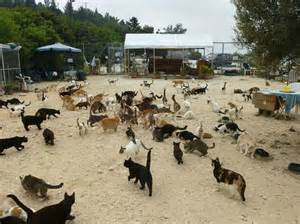 cat palace picture of tala monastery cat park