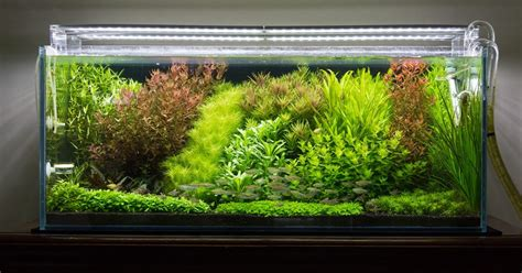 Style Aquascape by The Sytle Aquascape