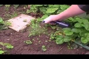 Flechten Entfernen Hausmittel : video nat rliche unkrautvernichter so helfen hausmittel ~ Lizthompson.info Haus und Dekorationen