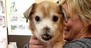 Meet Sniffles, the dog with no nose looking for a home