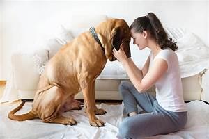 Hund Im Haus : listenhunde welche hunderassen stehen auf der liste ~ Lizthompson.info Haus und Dekorationen
