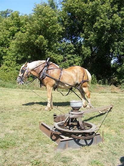 Horse Power Corn Farm Grinder Equipment Fashioned