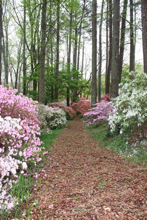 Best 25+ Callaway Gardens Ideas On Pinterest Pine