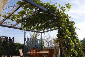 Plantes Grimpantes Pot Pour Terrasse : pergola v g tale plantes grimpantes et design ~ Premium-room.com Idées de Décoration