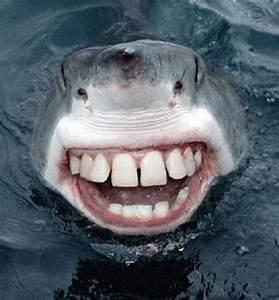 Funny Shark Smiley Face