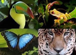 The amazon rainforest plants, amazon rainforest ...