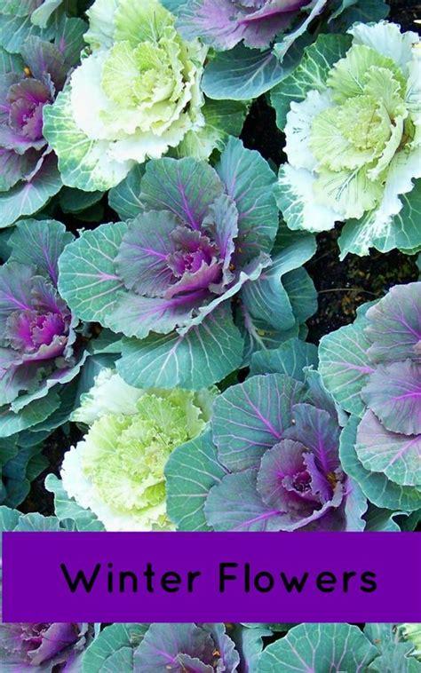 gardens florida and plants on