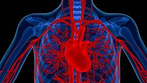 New Method For Regrowing Blood Vessels Developed
