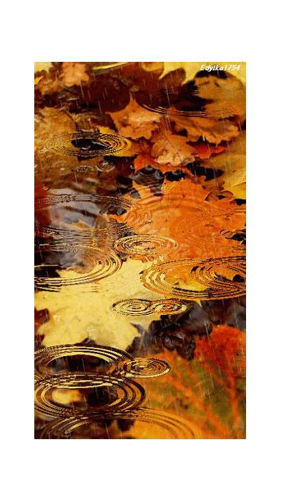 Autumn Leaves Rain Fall Colors Drops Nature