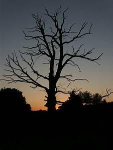 Dead Tree Silhouette | www.pixshark.com - Images Galleries ...