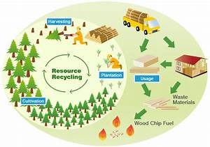 The Sustainable Forest Management Movement | Trending ...