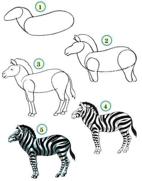 pin  sarah landis  diy zoo drawing zebra drawing draw