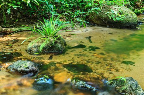 naturteich oder natuerlichen teich anlegen velda