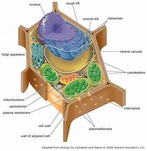 Print Chapter 6 Tour Of The Cell Mastering Ap Biology