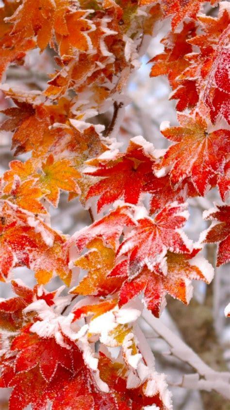 Autumn Lock Screen Wallpapers by Winter Leaves Cellphone Wallpaper Lock Screen Snow