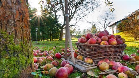Garten Abräumen Im Herbst by Garten Pflege Im Herbst Und Winter
