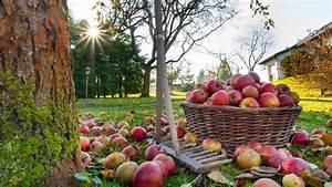 Garten Im Herbst : garten pflege im herbst und winter ~ Whattoseeinmadrid.com Haus und Dekorationen