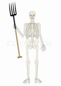 Vector A Skeleton Of The Person With A Pitchfork