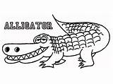 Alligator Coloring Pages Printable Crocodile Drawing Outline Alligators Cartoon Animal American Getdrawings Line Insider Drawings Getcoloringpages Letter Scientific Getcolorings Names sketch template