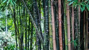 site de jardinage With amenagement jardin avec piscine 15 lierre grimpant plantation taille et entretien