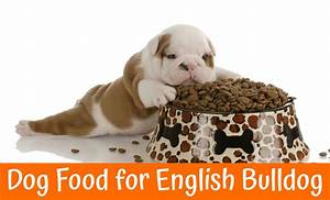 Best dog food for english bulldog us bones for Best dog food for english bulldogs