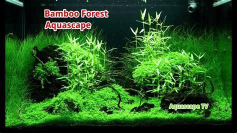 Bamboo Aquascape by Bamboo Forest Aquascape Asian Style Aquascape Tv
