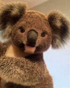 Bebe koala | Koalas | Pinterest | Animal, Adorable animals ...