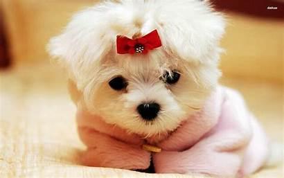 Puppy Pet Pets Breeds Wallpapertag
